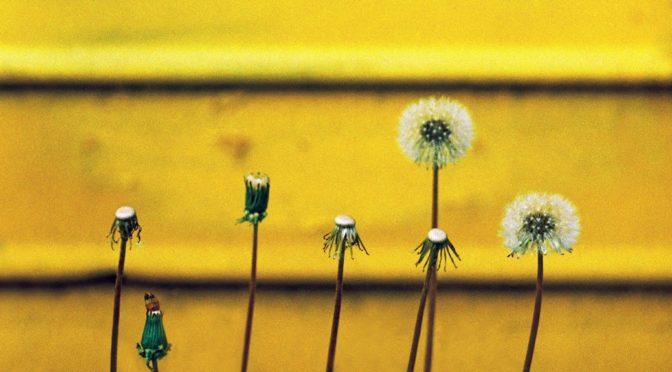 Аналогна фотографија: Живите живот у бојама